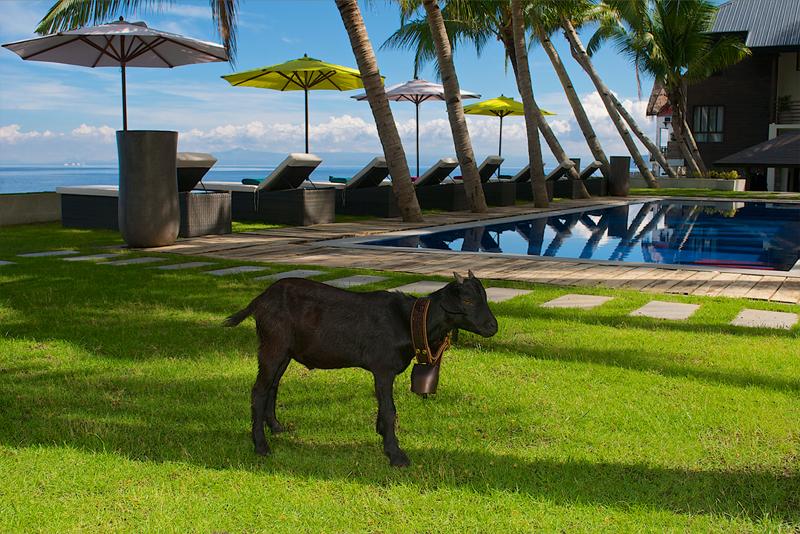 Le Chevrerie Garden Pool overlooking the ocean